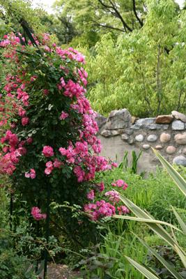 Garden30