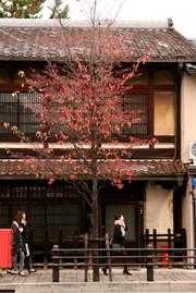Kyouto1_3