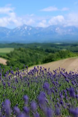 Hokkaidou3