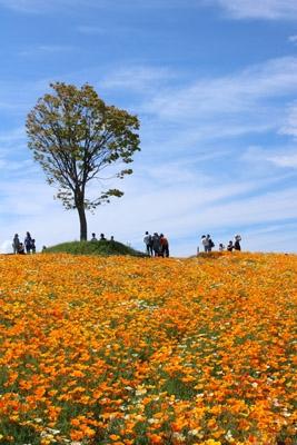 Hokkaidou5